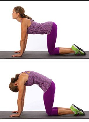 Cat-Camel Stretch-12 Best Exercises To Get Rid Of Back Fat At Home