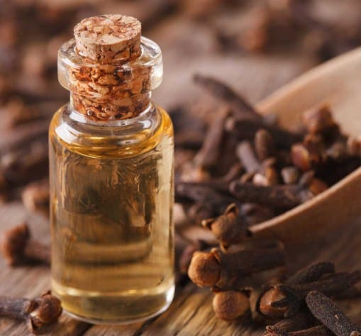 Clove Oil- Most Popular Essential Oils In The World
