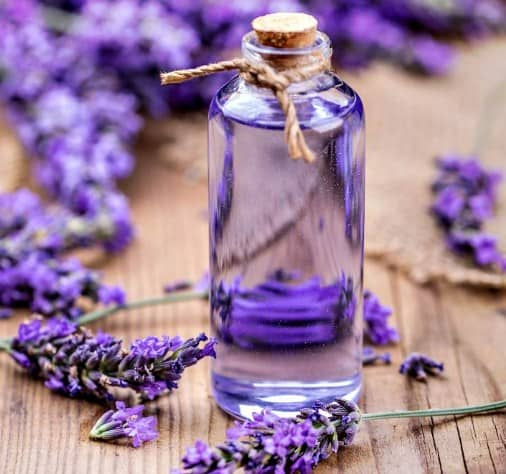 Lavender Oil- Most Powerful Antibacterial Essential Oils