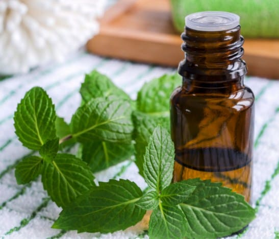 Peppermint Oil- Most Popular Essential Oils In The World