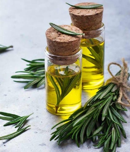 Rosemary Oil- Most Popular Essential Oils In The World