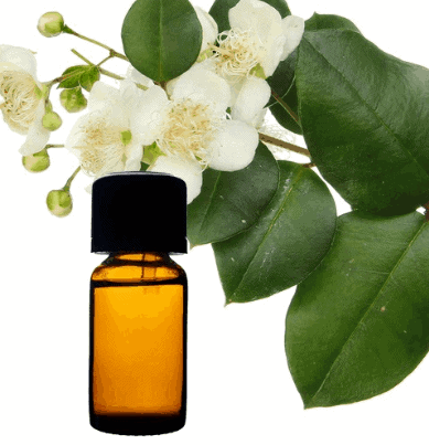 How to use Myrtle Oil to balance the hormones