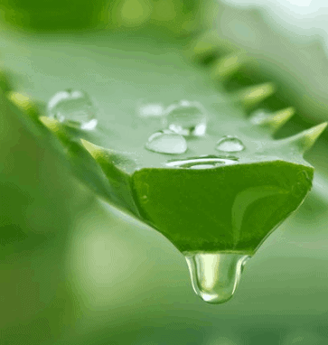 Use Aloe Vera - Natural Remedies For Flaky Lips