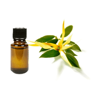 Ylang-Ylang Oil - Essential Oils For Insomnia