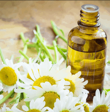 Chamomile Oil - Essential Oils For Nerve Pain Relief