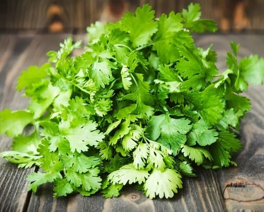 Coriander- Home Remedies To Get Rid Of Canker Sores