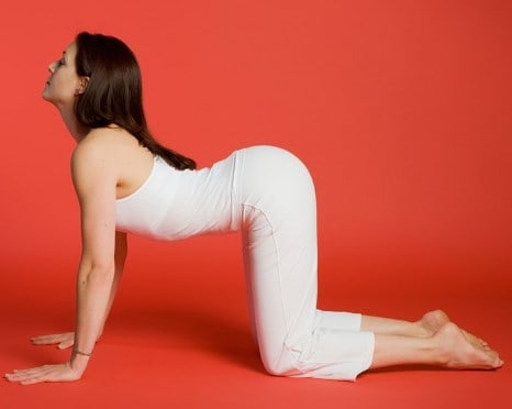 Cow Pose- Best Yoga Poses for Beginners