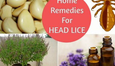 Head Lice Treatment: 11 Home Remedies for Head Lice That Really Work