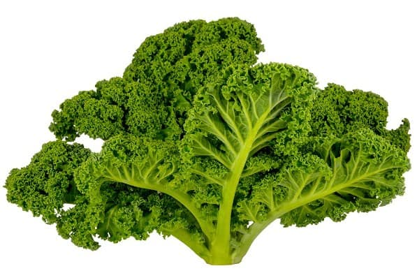 Kale- 17 Weight Loss Foods