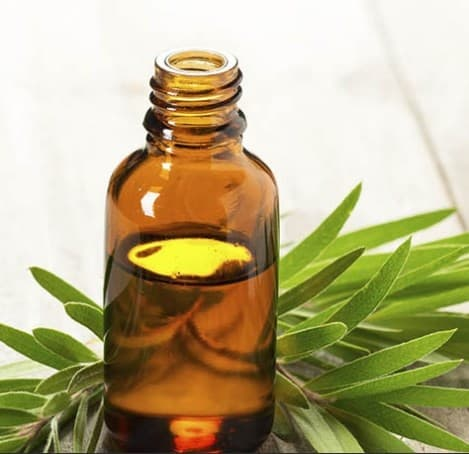 Tea Tree Oil- 11 Home Remedies for Head Lice That Really Work