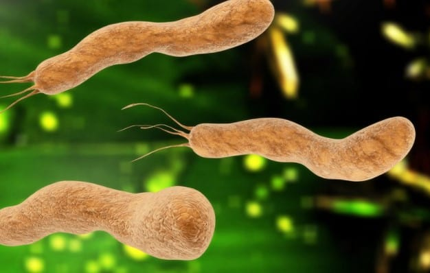 Helicobacter pylori- Causes of Digestive Disorder