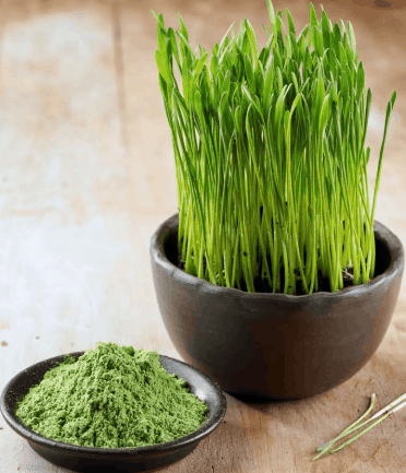 Wheatgrass Powder- 10 Superfood Powders That Can Boost Weight Loss