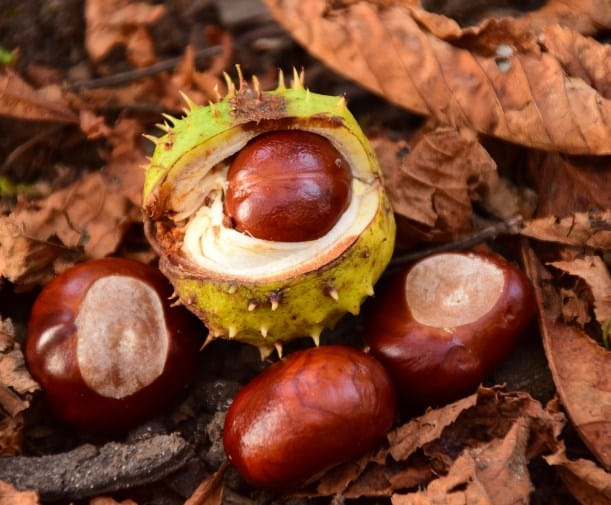 Chestnuts-10 Best Fiber Rich Food For Weight Loss